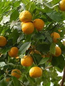 Arbre A Fruit : arbre fruits marie claire ~ Melissatoandfro.com Idées de Décoration