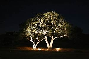 tree lighting expert outdoor lighting advice With outdoor lights for oak trees