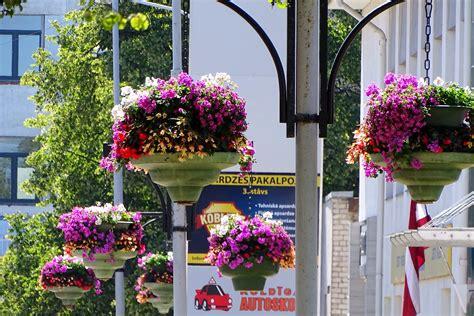 Košiem ziediem Ventspils zied!