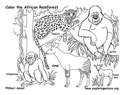 rainforest habitat coloring pages coloring pages