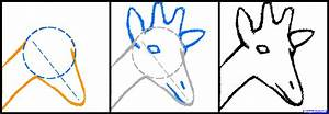 How to Draw a Giraffe Head, Step by Step, safari animals ...