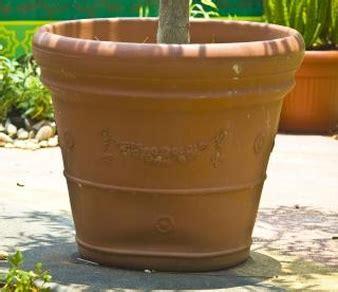 ceramic vase vectors photos and psd files free