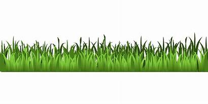 Grass Meadow Vector Pixabay Graphic Agriculture