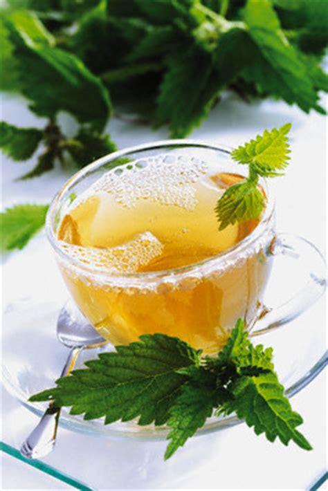 buy stinging nettle leaf tea benefits    side