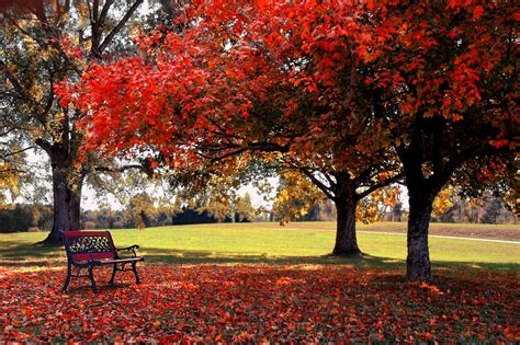 Fall Backgrounds For Desktop Computers by Free Fall Backgrounds Desktop Wallpaper Cave