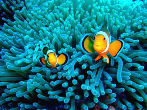 Gili Trawangan Dive Dive Photos Gili Islands Manta Dive
