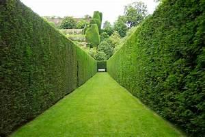 Hedges v Fences - Charlie Dimmock's Gardening Blog - Let's