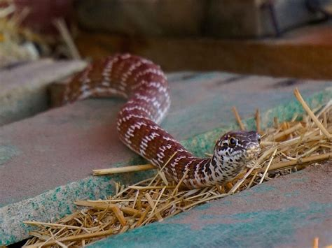 Snakes on farms: Everything you need to know   AGDAILY