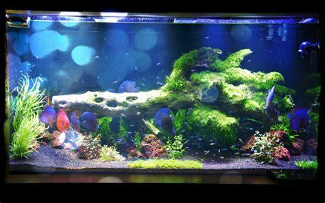 led aquarium lighting planted tank led aquarium lighting blog orphek may 2014