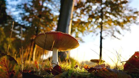 red  white mushroom  green grass  daytime