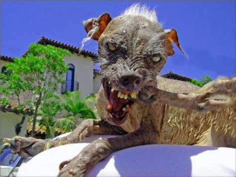 the ugliest animals on the planet 11 pictures memolition
