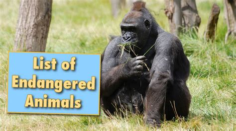 list  endangered animals  facts info pictures