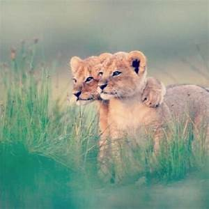 The Wild Hug : 36 amazing animal hugging photos ~ Eleganceandgraceweddings.com Haus und Dekorationen