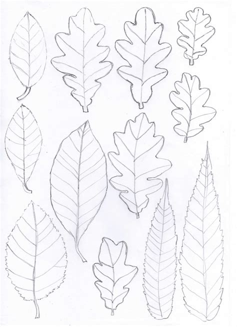 paper leaf template bugs and fishes by lupin how to oak leaf yarn wreath
