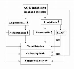 Scheme Explaining The Mechanisms Of Action Of Ace