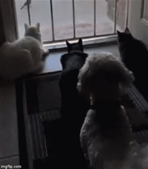 Cats watch bird, dog scares cats / Boing Boing