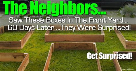 neighbors   boxes   front yard  days