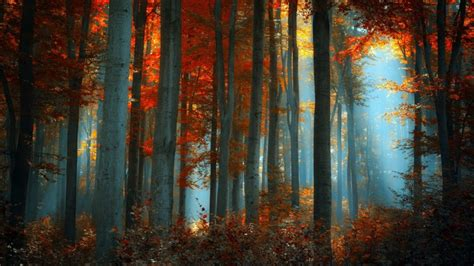 best forests in america top 10 countries with largest forest area land in the world