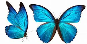 X-ray snapshot of butterfly wings reveals underlying ...