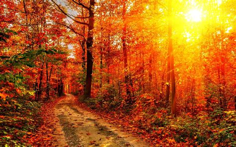 Autumn Wallpapers Hd by Autumn Season Hd Wallpapers