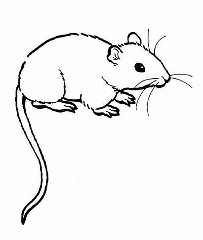 Rat Coloring Pages Rats Printable