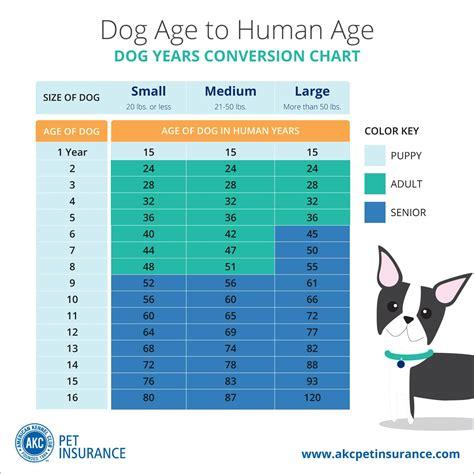 dog years  human years