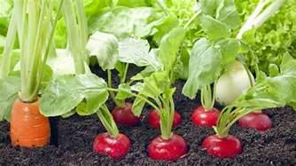 Vegetable Raised Garden Beds