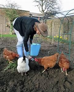 Comment Elever Des Poules : 3 fa ons de r concilier poules et potager ~ Melissatoandfro.com Idées de Décoration