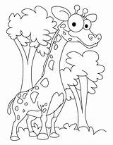 Giraffe Coloring Printable Fun Giraff Bestappsforkids Games Adults Patient Children Ambitious Preschool Animals Valentine Bing Golfrealestateonline sketch template