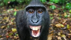 The Funkiest Monkeys
