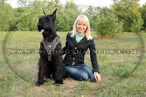 Giant Schnauzer (Riesenschnauzer) Breed Standard : Dog