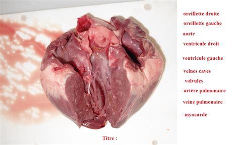 cuisiner coeur de porc corps humain et santé l exercice physique vive les svt