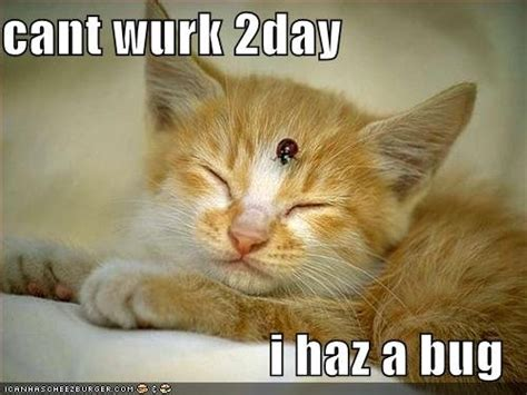 Sick Cat Meme - books crafts pretty things blog winners of my giveaway belated cat thursday