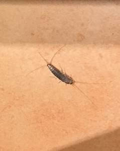 Mückennester In Der Wohnung : was sind das f r tierchen in der wohnung ungeziefer ~ Watch28wear.com Haus und Dekorationen