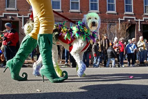 Is Your Dog's Halloween Costume Sexist?