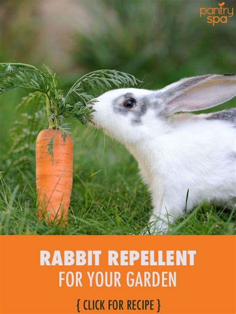 Rabbit Repellent For Gardens - 17 best images about garden ideas on gardens