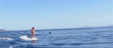 remarkable dolphins jumping animated gifs   animations