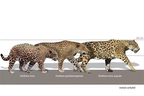 jaguar  leopard pesquisa google prehistoric animals