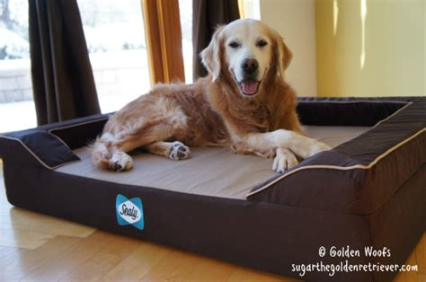 your dog deserves a restful sleep on a sealy bed sugar