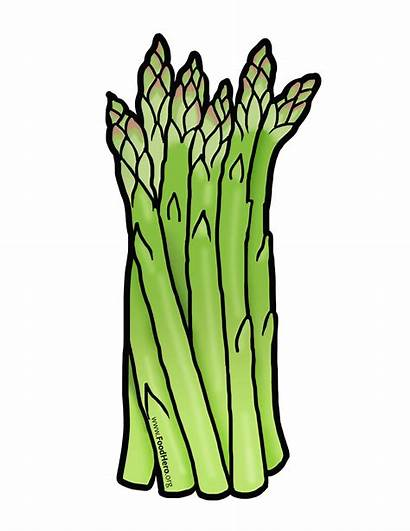 Clipart Asparagus Foodhero Frutas Verduras Artwork Animadas
