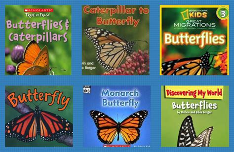 time 4 kindergarten caterpillars and butterflies oh my 740 | butterflie2