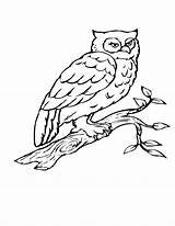 Coloring Bird Pages Owl Tree Birds Branch Drawing Flying Print Birch Printable Getdrawings Heart Getcolorings Popular sketch template