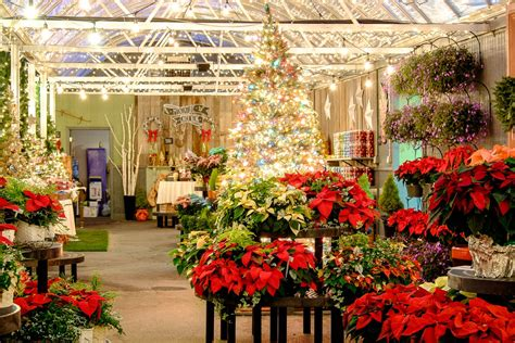 container christmass tree lancaster pa trees and decor at frey s greenhouse in lancaster pa and lebanon pa