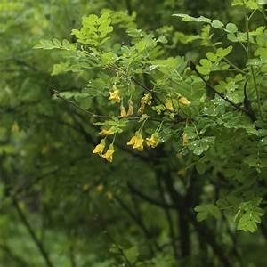 Arbustes Décoratifs à Fleurs : arbre caduc liste ooreka ~ Premium-room.com Idées de Décoration