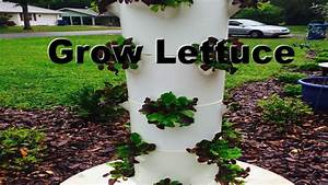 Cleaning Out My Tower Garden & Tips For Growing Lettuce in ...