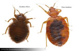 Pictures Of Carpet Beetle Bites On Humans by Mozambique Diary Snug As A Bug The Smaller Majority By