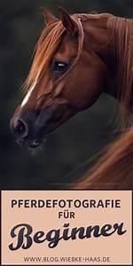 F U00fcr Alle Beginner Der Pferdefotografie Habe Ich In Diesem