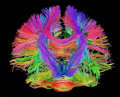 Brain Human Mind Mapping Understand Brainmap Think