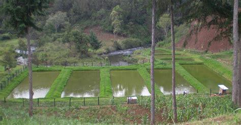 community based fish farming  kenya public private