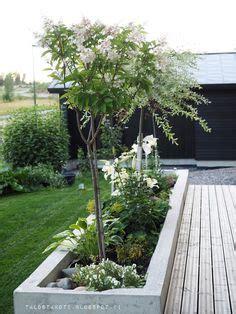 pflanzen für steingarten winterhart geschickt platziert geben die taxus kugeln dem vorgarten den richtigen pfiff tolle garten